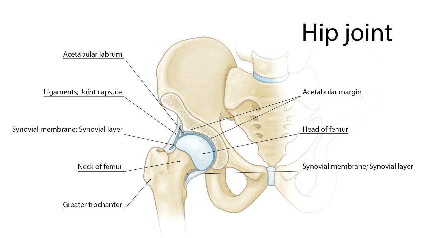 Hip Labrum Impingement Image